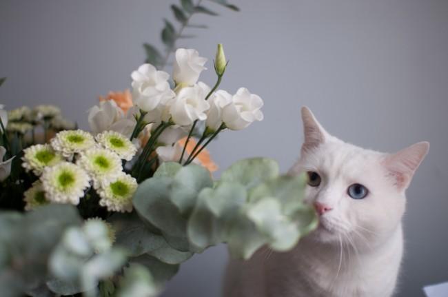 la-joie-des-fleurs_3