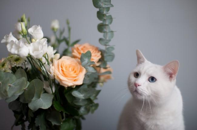 la-joie-des-fleurs_4