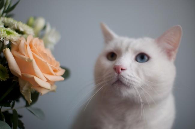 la-joie-des-fleurs_5