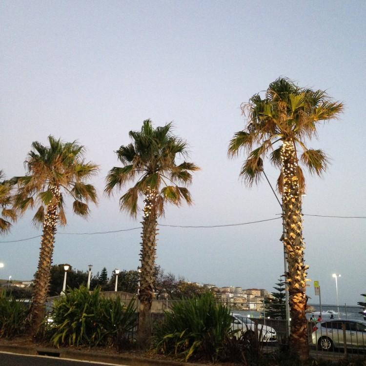 sydney-bondi-beach-campbell-parade