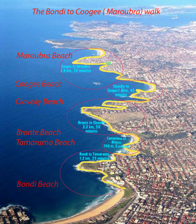 coastal-walk-bondi-to-coogee-map