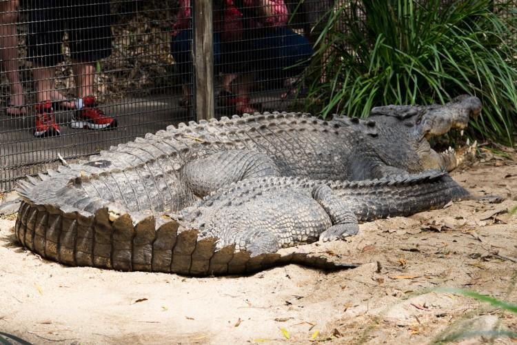 australie-crocodile-hartleys-11