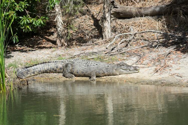 australie-crocodile-hartleys-9