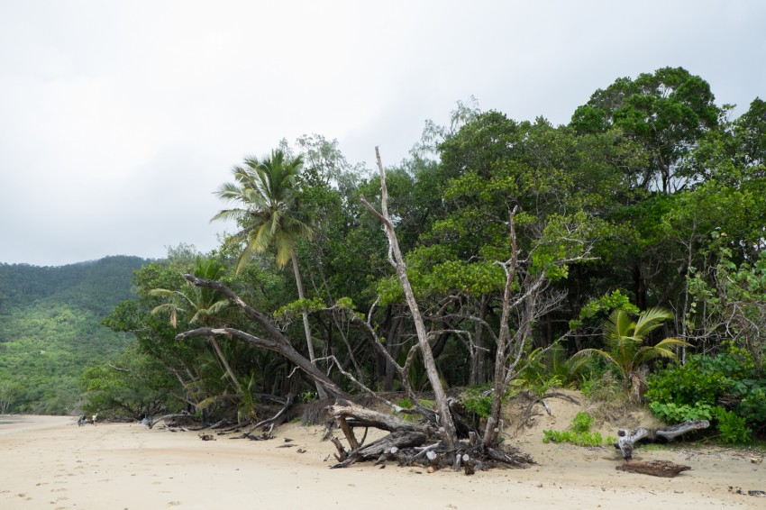 australie-queensland-daintree-cow-bay-9