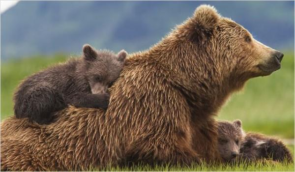 grizzly-disney-2