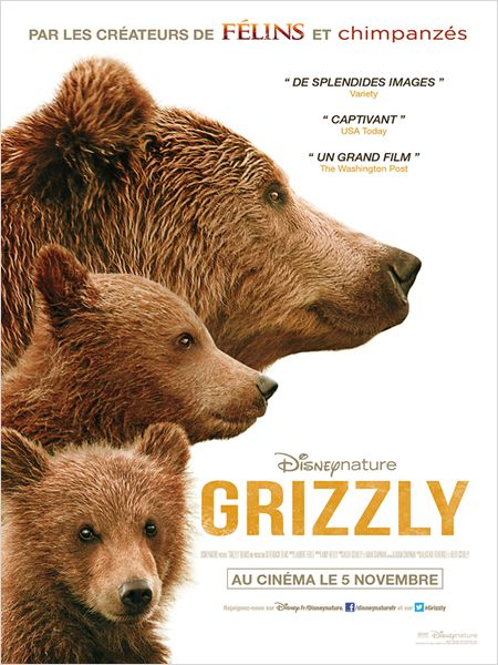 grizzly-disney-affiche
