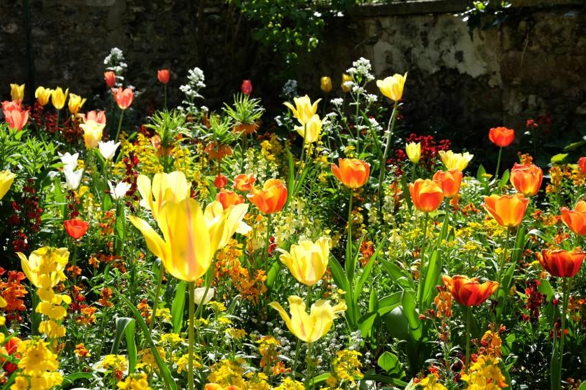 Giverny Le Jardin De Claude Monet Au Printemps