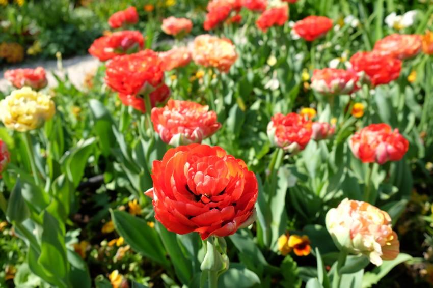 http://www.clyne.fr/wp-content/uploads/2015/05/giverny-jardin-monet-fleurs08.jpg