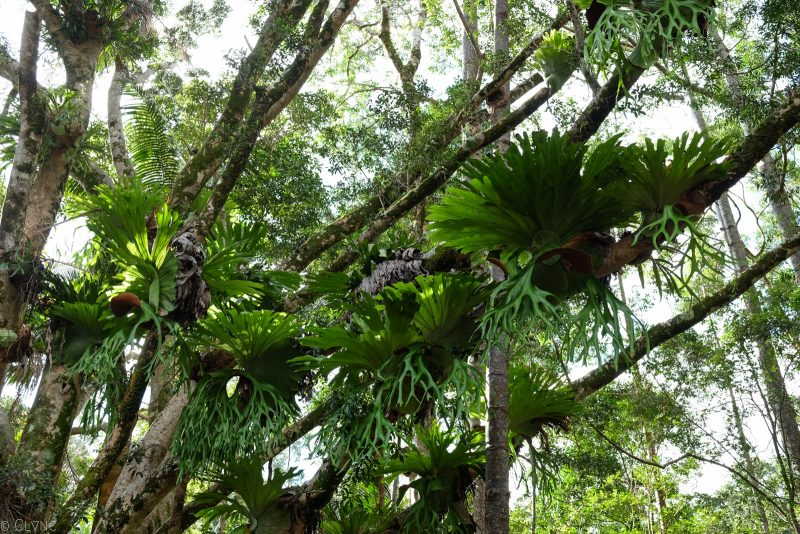 australie-fraser-island-rainforest