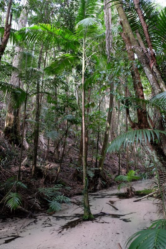 australie-fraser-island-wanggoolba