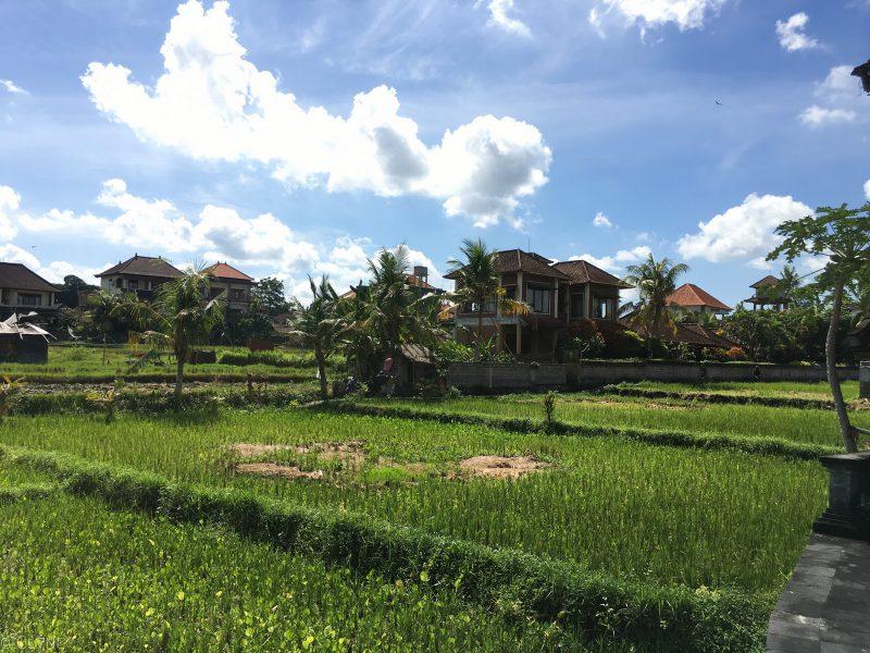 bali-ubud-ala-green-lagoon