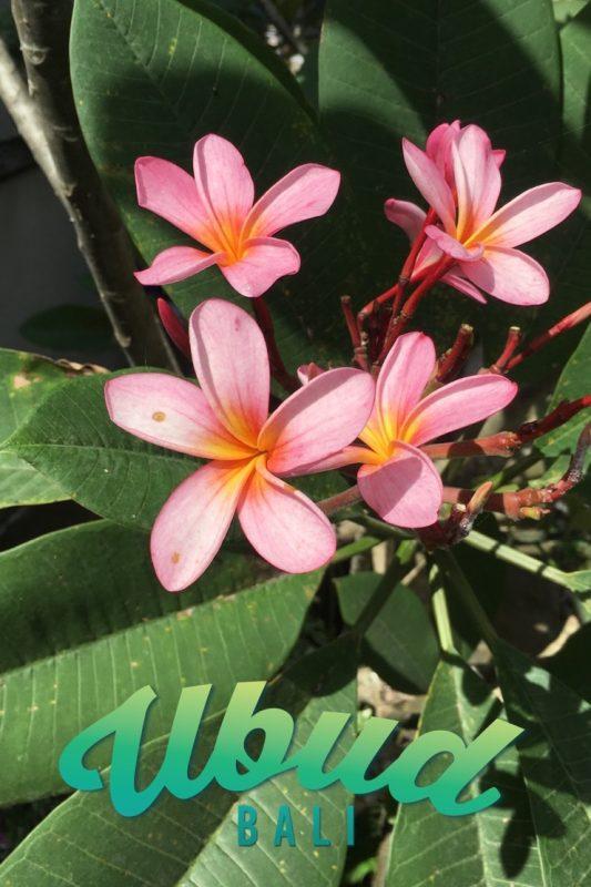 bali-ubud-fleurs