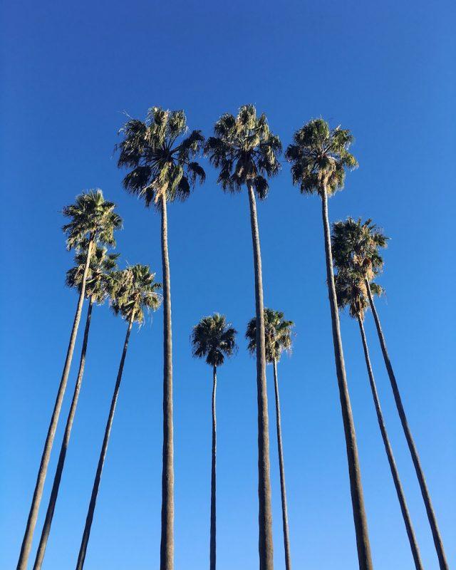 sydney-palmiers