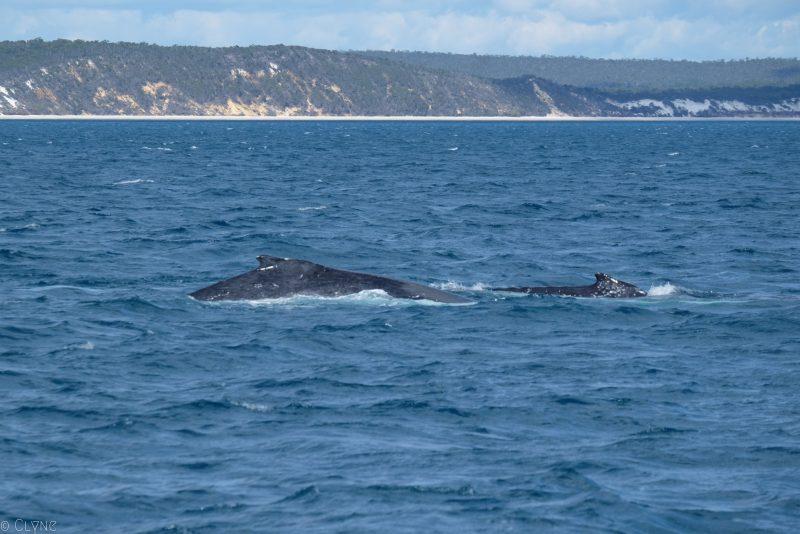 australie-queensland-observation-baleines_1
