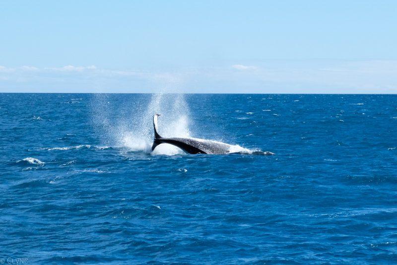 australie-queensland-observation-baleines