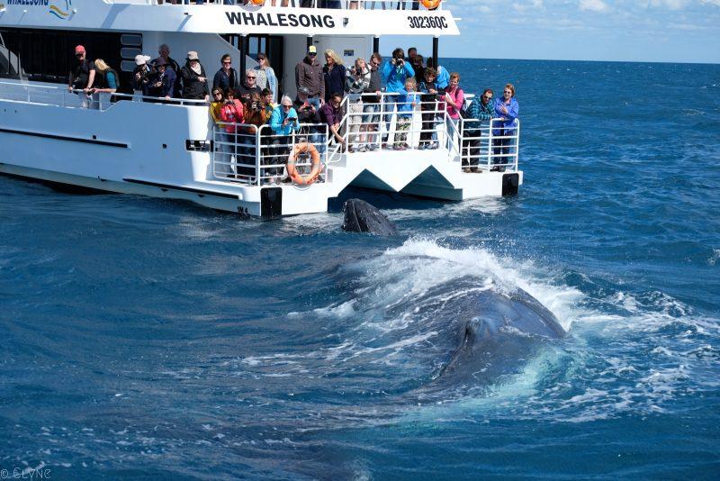 australie-queensland-observation-baleines_4
